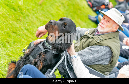 Gordon Castle, Fochabers, Moray, Scotland, UK. 19th May, 2019. This is from the gathering of the Gordon Setters at ther birthplace of Gordon Castle during the Highland Games and Country Fair. This is John Cobs from Portsmouth with his 14 month old boy Setter. Credit: JASPERIMAGE/Alamy Live News - Stock Photo