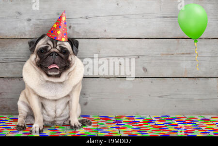 frolic smiling birthday party pug dog, with confetti and balloon, sitting down celebrating, on old wooden backgrond - Stock Photo