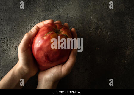 Organic Bull's Heart Heirloom Tomato in Female Hands. Superfood Healthy Eating Concept. - Stock Photo