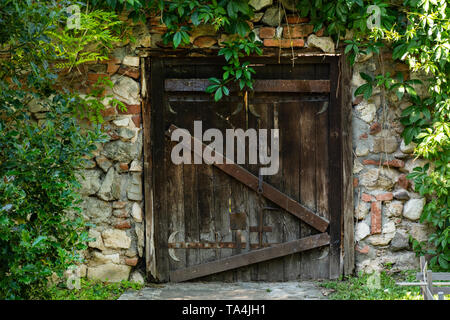 The very old wooden door on the house and wall covered with green leave of plants. Exterior view of the door with an old metal padlock. Close up - Stock Photo