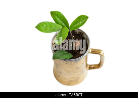Cells for seedlings at home. Growing plants on the windowsill. - Stock Photo