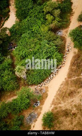 Aerial view of sheep being herded on rural road near village in Bagan, Myanmar. - Stock Photo