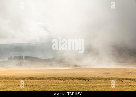 Germany, Hessian Rhoen Nature Park, autumn fog on the Wasserkuppe - Stock Photo