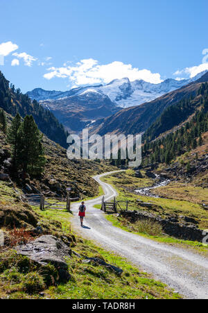 Austria, Salzburg State, High Tauern National Park, Zillertal Alps, woman hiking on trail - Stock Photo