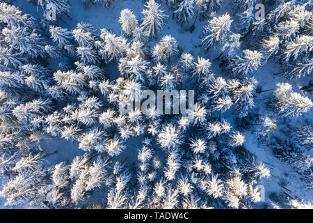 Germany, Bavaria, aerial view over snowy spruce forest - Stock Photo