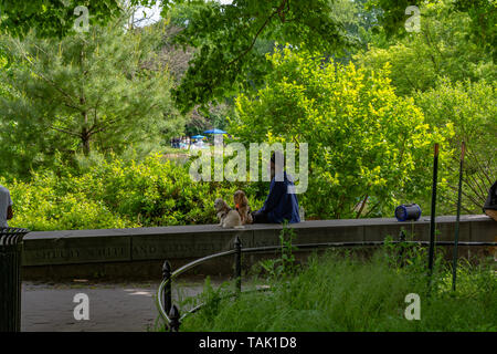 African american and two small dogs are sitting in the park - Stock Photo