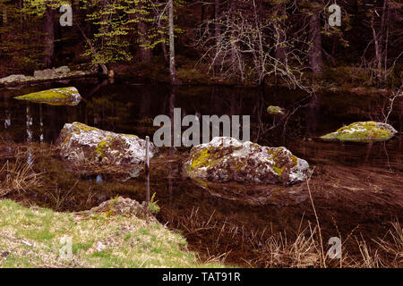 Mossy rocks in a forest lake. Still water, submerged stones, dark water. Reflections in transparent water. Black Forest, Germany. Natural background. - Stock Photo
