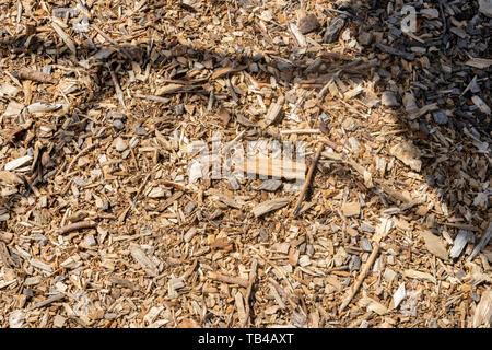 Wood chips and small pieces of dried wood lying on the ground - Stock Photo