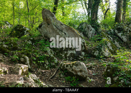 A pile of large stones in the forest, overgrown with moss, grass and trees. Stone background - Stock Photo