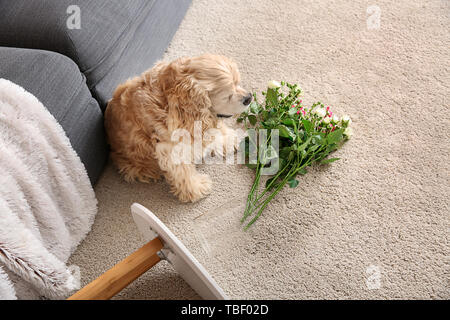 Naughty dog and dropped vase with flowers on carpet - Stock Photo