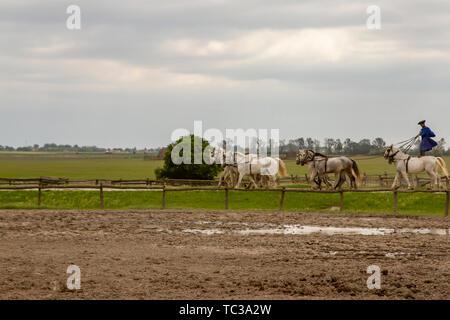 Kalocsa, Puszta, Hungary - May 23, 2019 : Hungarian Csikos equestrians displaying riding skills in corral of rural Kalocsa, Hungary by performing ten- - Stock Photo