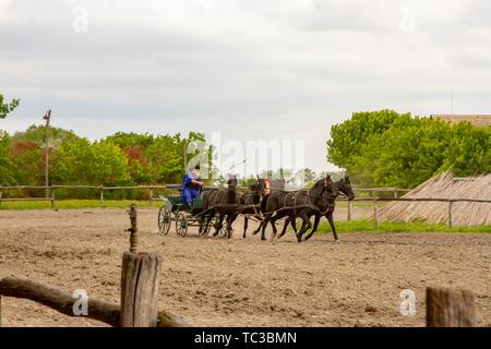 Kalocsa, Puszta, Hungary - May 23, 2019 : Hungarian Csikos equestrians displaying riding skills in corral of rural Kalocsa, Hungary. - Stock Photo