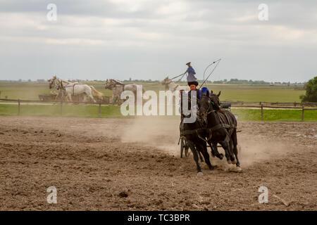 Kalocsa, Puszta, Hungary - May 23, 2019 :  Csikos Hungarian equestrains performing stunts in corral. - Stock Photo