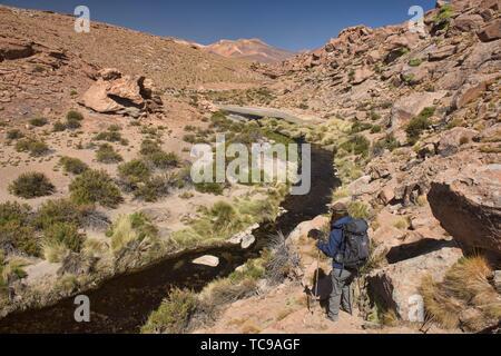 Hiking along the Rio Blanco thermal river near El Tatio Geyser, San Pedro de Atacama, Chile. - Stock Photo