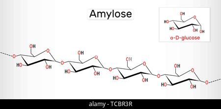 Amylose molecule. It is a polysaccharide and one of the two components of starch. Structural chemical formula. Vector illustration - Stock Photo
