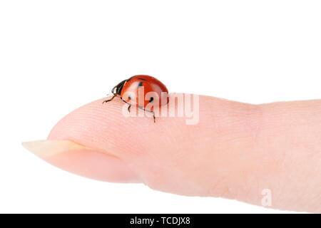 ladybird on finger isolated on white - Stock Photo