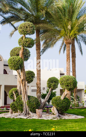 Well-groomed park territory of five star hotel in Sharm El Sheikh. Landscape design with cacti and palm trees at resort in Egypt. - Stock Photo
