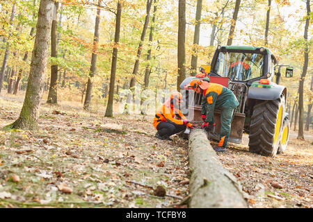 Lumberjacks carry a tree trunk with the forwarder in the forest district - Stock Photo