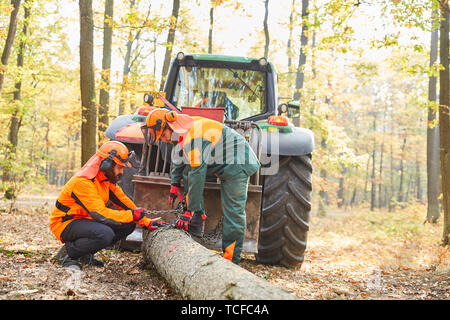 Two forest workers or lumberjacks in the wood back with the forwarder in the forest - Stock Photo
