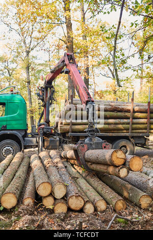 Forwarder with forestry crane loading lumber during timber harvesting in the forest - Stock Photo