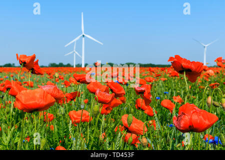 Red poppy plants and blue flowers in the cornfield in sunshine. Wind energy turbine and trees in the background at blue sky. Flowers in nature in bloo - Stock Photo