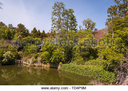 Landscaped garden on the grounds of the Ryoan-ji Zen temple complex, Ryoanji Goryonoshitacho, Ukyō-ku, Kyoto, Honshu, Japan - Stock Photo