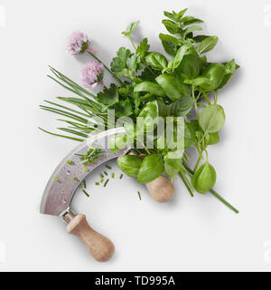 Mezzaluna knife with a variety of fresh leafy green herbs and chive flowers on a white square background in a flat lay food still life - Stock Photo