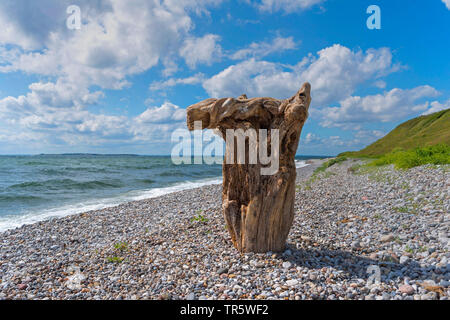 dead tree stump at the pebble beach of the Danish Baltic Sea island Samsoe, Denmark, Samsoe - Stock Photo