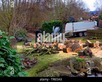 northern red oak (Quercus rubra), felling of an oak in a garden, Germany, North Rhine-Westphalia - Stock Photo