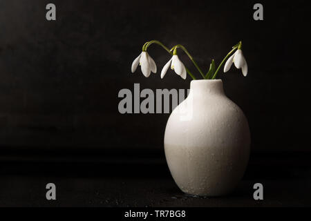 Still life with Snowdrops in a white vase with dark background - Stock Photo