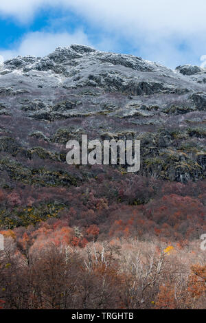 Autumn in the heart of the Mapuche territory, temperate forest, Chile - Stock Photo