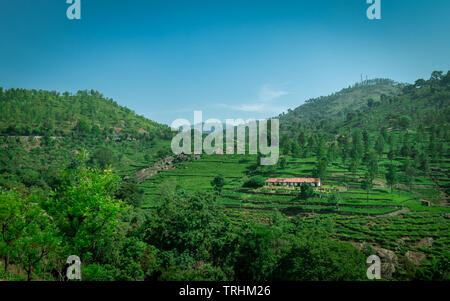 Isolated homes with beautiful landscape in tea garden image is taken at ooty tamilnadu showing the peace and beauty of nature. - Stock Photo