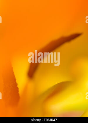 Abstract image inside a tulip - Stock Photo