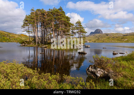 Scots pine trees and island on Loch Druim Suardalain with Suilven in the background, near Glencanisp Lodge, Assynt, Sutherland, Highlands, Scotland - Stock Photo
