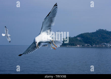 Flying seagulls above the calm blue sea - Stock Photo