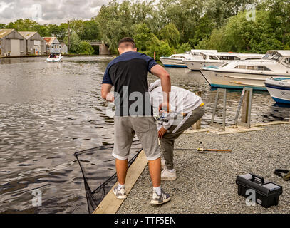 Two teenage males attending to the pike they have just caught that is in the landing net ready to be unhooked and released back in to the River Bure i - Stock Photo