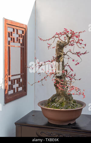Chuan-style potted plant potted landscape - Stock Photo