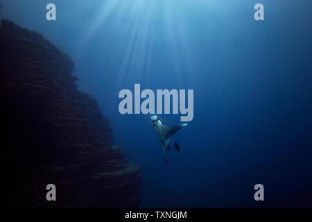 Giant Oceanic manta ray, Revillagigedo Islands, Socorro, Baja California, Mexico - Stock Photo