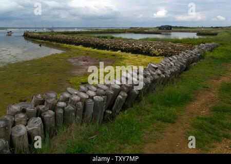 anthropogenic,climate,change,global,warming,sea,level,rise,Newtown,Nature,Reserve,Isle of Wight,England,UK, - Stock Photo