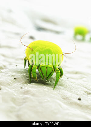3d rendered illustration of a house dust mite - Stock Photo