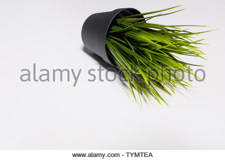 Decorative artificial green grass in plastic pot isolated on white background. - Stock Photo