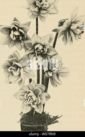 Archive image from page 626 of Die Gartenwelt (1897) - Stock Photo