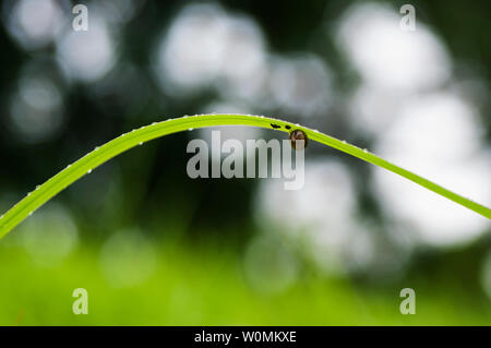 Nature ecological photography, microphotography, the world of insects - Stock Photo