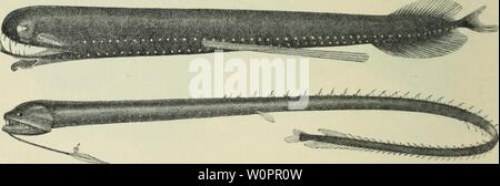 Archive image from page 117 of The depths of the ocean; - Stock Photo