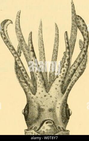 Archive image from page 626 of The depths of the ocean - Stock Photo