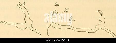 Archive image from page 117 of Die Mytiliden des Golfes von. - Stock Photo