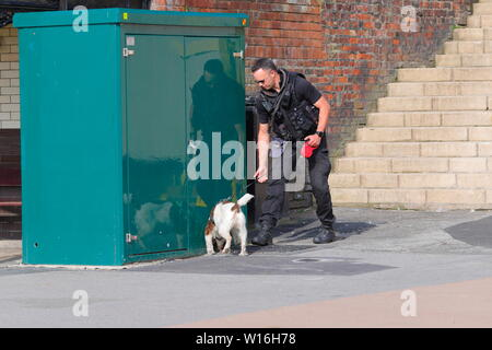 A police officer with a sniffer dog looking for suspicious packages during Scarborough Armed Forces Day. - Stock Photo