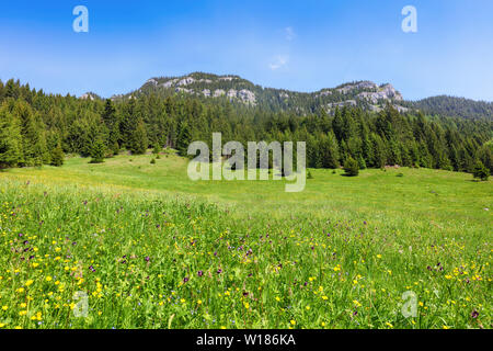 Mountain with rocks and forest - Ohniste, Low Tatras - Stock Photo