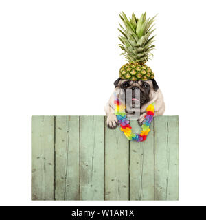 frolic smiling tropical summer pug puppy dog with flower garland, hanging with paws on reclaimed wooden fence board, isolated on white background - Stock Photo