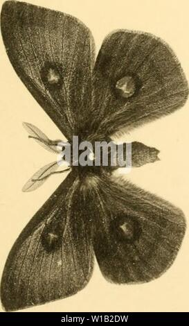 Archive image from page 304 of Deutsche entomologische Zeitschrift Iris (1902). Deutsche entomologische Zeitschrift Iris . deutscheentomolo241910ento Year: 1902 - Stock Photo